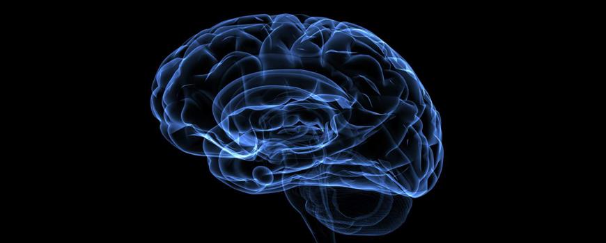 la-donacion-de-cerebros-en-la-investigacion-de-enfermedades-neurodegenerativas