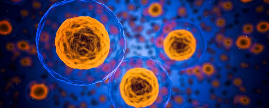 la-nrf2-una-proteina-que-puede-ser-clave-para-tratar-trastornos-degenerativos